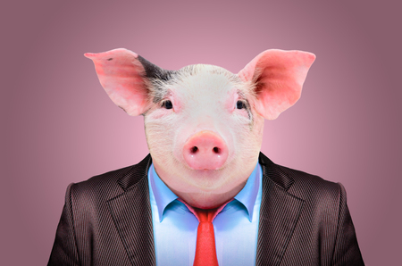 Portrait of a pig in a business suit on a pink background