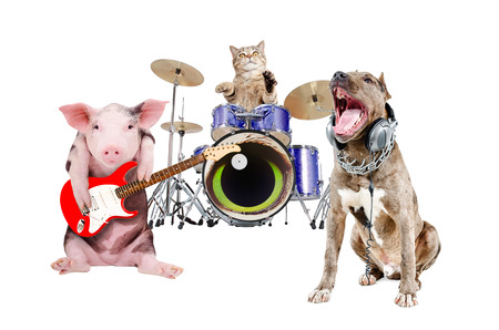 Funny trio of animal musicians, isolated on white background Stock Photo