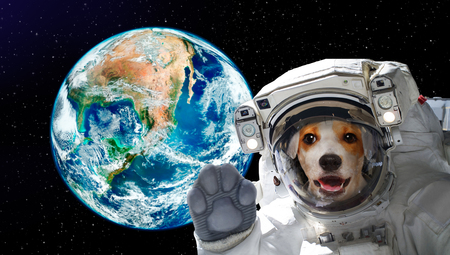 Pretty dog ??astronaut in space on the background of the globe. Elements of this image.