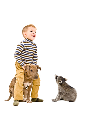 Cheerful boy playing with a puppy pitbull and a curious raccoon, isolated on white background