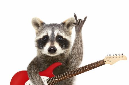 Retrato de un gracioso mapache con guitarra eléctrica, mostrando un gesto de rock, aislado sobre fondo blanco. Foto de archivo