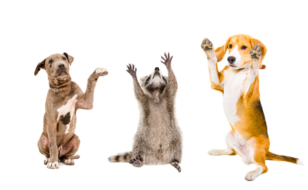 The company of playful animals isolated on white background Stock Photo