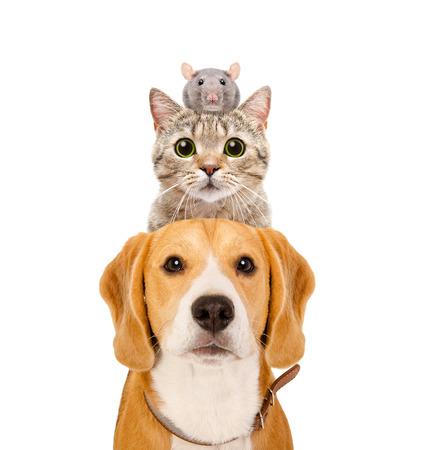 Lustiges Porträt von Haustieren lokalisiert auf weißem Hintergrund Standard-Bild