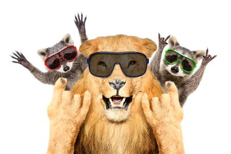 Portrait of a animals in sunglasses
