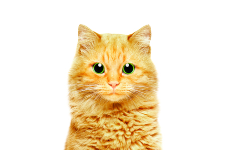 Portrait of a beautiful ginger cat with green eyes, closeup, isolated on white