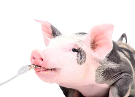 Portrait of a cute piggy