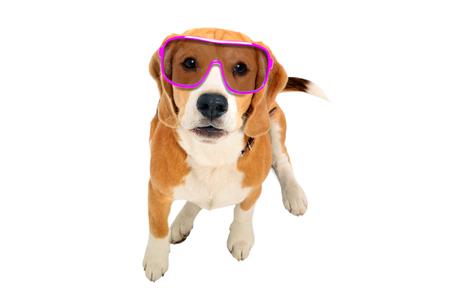 Portrait of a cute dog in pink sunglasses