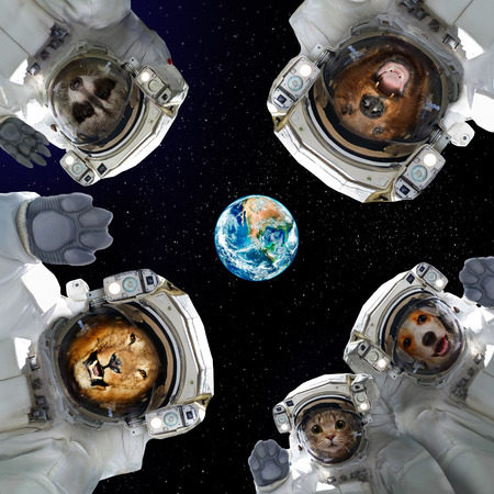 Animals in the space of the planet Earth. Stock Photo