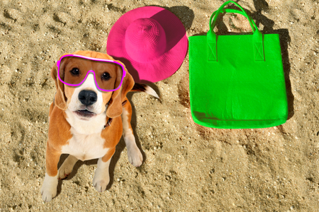Portrait of a cute beagle dog in sunglasses sitting on the beach Banco de Imagens