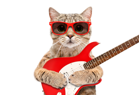 Cat Scottish Straight in sunglasses with electric guitar