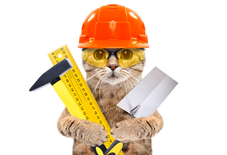 Porträt einer Baumeisterkatze mit Werkzeugen in den Pfoten