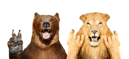 Funny bear and lion showing gestures
