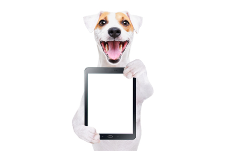 Jack Russell Terrier with tablet isolated on white background Banco de Imagens