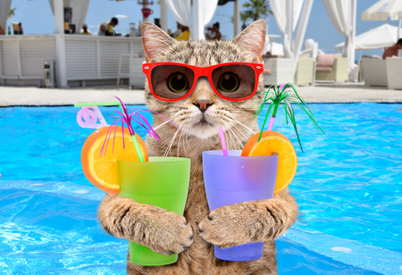 Funny cat on background pool Banco de Imagens