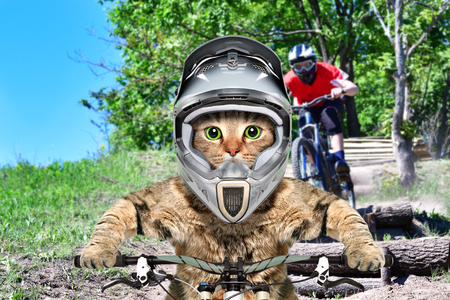Cat in a cycling competition