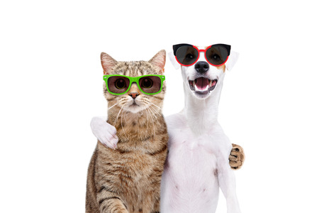 Jack Russell Terrier and cat scottish straight in sunglasses hugging each other