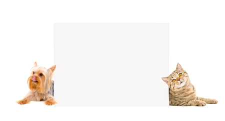 Cat and Yorkshire terrier lying behind banner Banco de Imagens