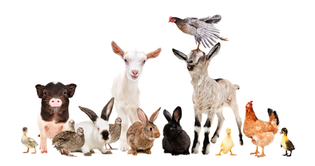 Group of funny farm animals