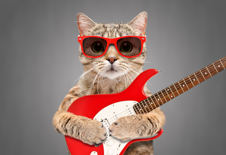 Cat Scottish Straight in sunglasses with electric guitar Stockfoto