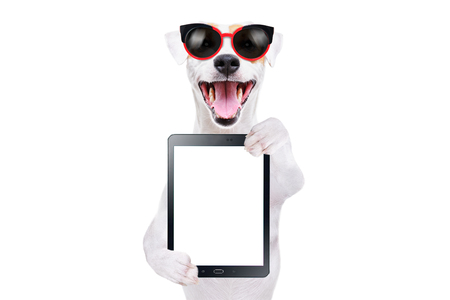 Cheerful dog Jack Russell Terrier in sunglasses with a tablet