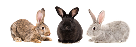 Three rabbits together isolated on white background Banco de Imagens