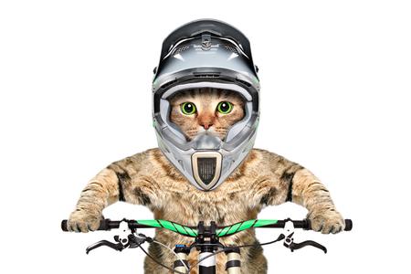 Cat in a helmet Banco de Imagens - 118503871