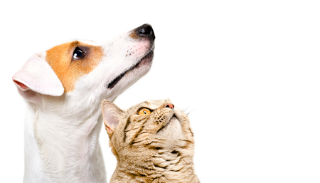 Portrait of a cute dog Jack Russell Terrier and cat