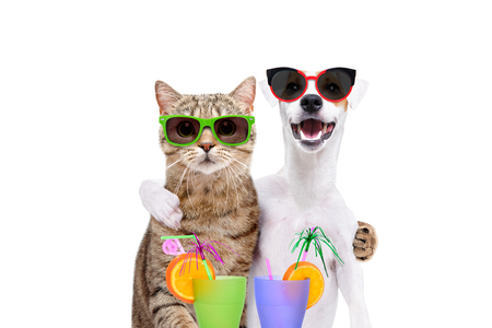 Jack Russell Terrier and cat scottish straight in sunglasses hugging each other, holding cocktails in paws