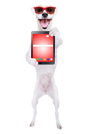 Jack Russell Terrier in sunglasses with tablet in paws Banco de Imagens - 119754655