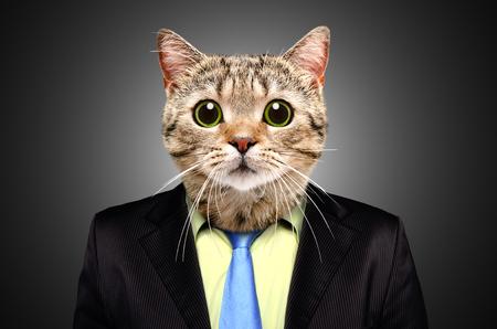 Portrait of a cat in a business suit