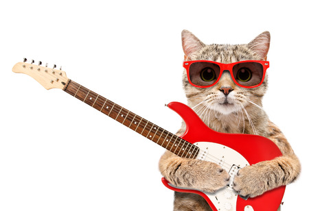 Cat in sunglasses with electric guitar Banco de Imagens - 119754774