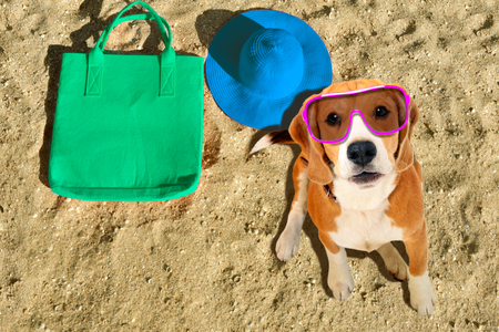 Portrait of a funny beagle dog in sunglasses sitting on the beach Banco de Imagens - 121178221