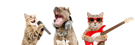 Portrait of pets musicians together isolated on white Banco de Imagens - 121178229