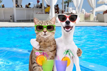 Hund und Katze umarmen sich Standard-Bild