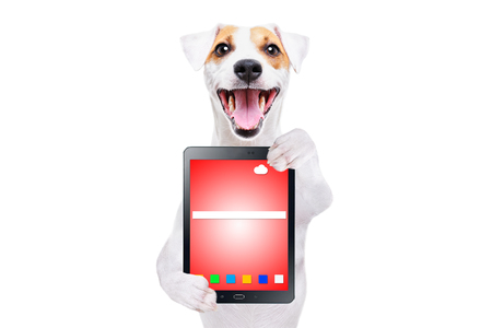 Cheerful dog Jack Russell Terrier with tablet Stock Photo