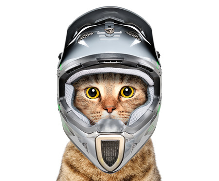 Cat in a bicycle helmet Stock Photo