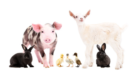 Group of cute farm animals isolated on white background Stock Photo