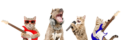 Portrait of four pets musicians together Stock Photo