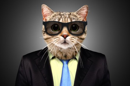 Portrait of a cat in a business suit and glasses