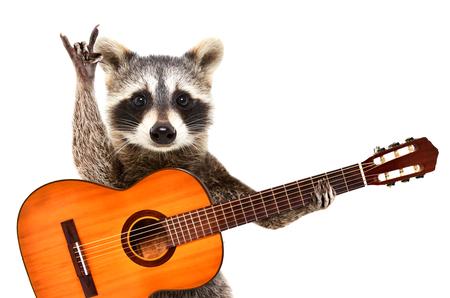 Portret van een grappige wasbeer met gitaar