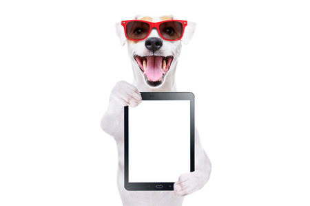 Jack Russell Terrier in red sunglasses with tablet in paws Stock Photo