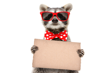 Portrait of a funny raccoon in sunglasses