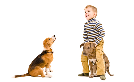 Cheerful little boy playing with his dogs