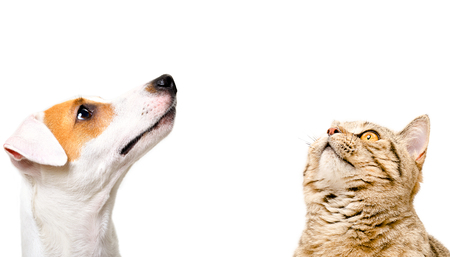 Portrait of a cute dog Jack Russell Terrier and cat Banco de Imagens - 124173093
