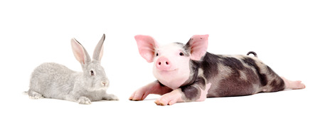 Funny pig and cute rabbit together Banco de Imagens - 124173151