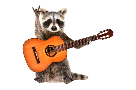 Funny raccoon with acoustic guitar