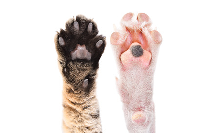 Two paws of cat and dog together Banco de Imagens