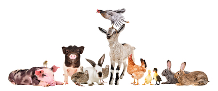 Group of cheerful farm animals