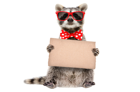 Funny raccoon in sunglasses and bow with banner