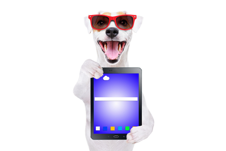 Funny dog Jack Russell Terrier in sunglasses with a tablet Banco de Imagens